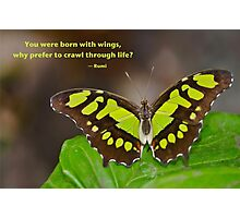 Born With WIngs Photographic Print