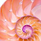 Nautilus shell by Jim  Hughes