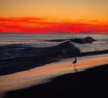 Willet on the shore at sunset, Bogue Banks, North Carolina by Bob Ramsak