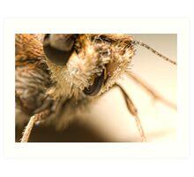 Skitter Butterfly Art Print
