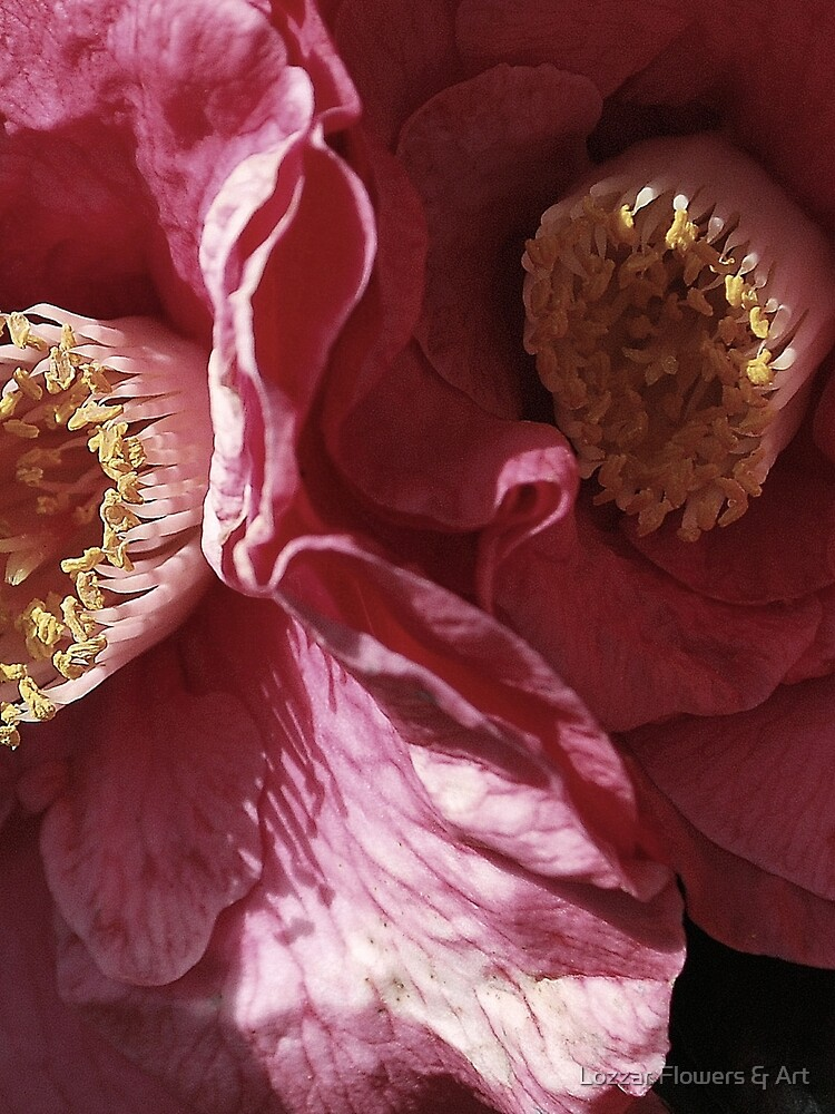 Camellia's Dance By Lorraine McCarthy by Lozzar Flowers & Art