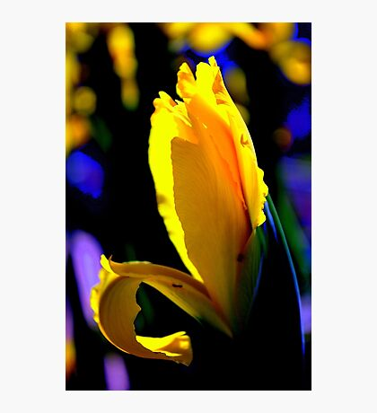 Sunlit Passion By Lorraine McCarthy Photographic Print