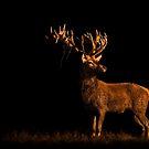 Last Light Red Deer by George Wheelhouse