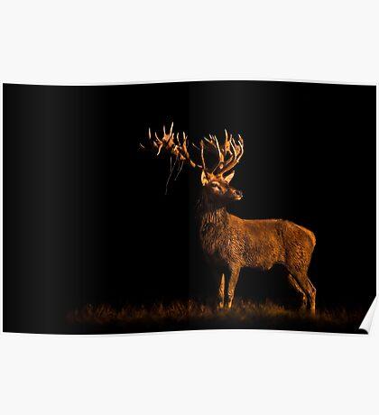 Last Light Red Deer Poster