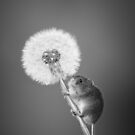 Harvest Mouse & Dandelion by George Wheelhouse