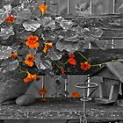 Nasturtiums In The Breeze - Selective Color by Sandra Foster