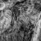 Brown Hare Close-Up by George Wheelhouse