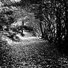 Autumn Tunnel by Geoff Smith