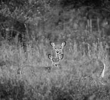 Doe And Yearling Fawn by Thomas Young