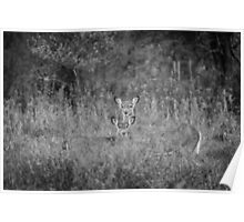 Doe And Yearling Fawn Poster