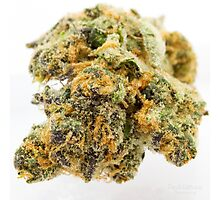 Girl Scout Cookies Strain Photographic Print