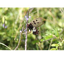 Unique Butterfly on  Flower Photographic Print