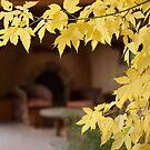 Fall Foliage and Kiva by Denice Breaux