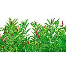Tropical Floral Print Photographic Print