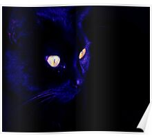 Black Cat With Haunting Halloween Eyes Poster