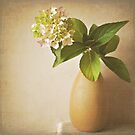 Hydrangea with leaves. by Lyn  Randle