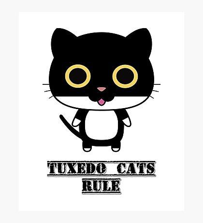 Tuxedo Cats Rule Photographic Print
