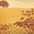 By the side of the wheat field. by Lyn  Randle