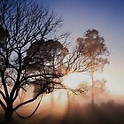 Quiet morning by Jeanette Varcoe.