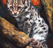 Wild Cat by Peter Williams