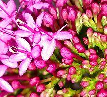 Dainty Pink Flower by sammiejayjay