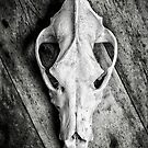 Skull on Wood by Dave Hare