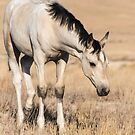 Pale Pinto Filly by Kelly Jay