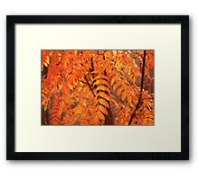 Mountain Ash Leaves - Autumn Framed Print