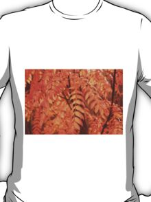 Mountain Ash Leaves - Autumn T-Shirt
