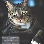 Purfection: moments in the life of a rescued cat by 100LoyalFaces