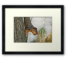 Hmmm...Every time I try to eat upside down I lose my nut. So much for being a trend setter... Framed Print