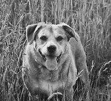 Happy Dog in Field by Vicki Field