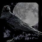 Raven at Midnight by debidabble