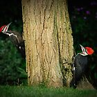 PILIATED WOODPECKERS by Diane Peresie