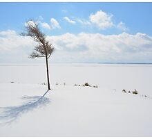 Winter Untouched by BrasdOrLife