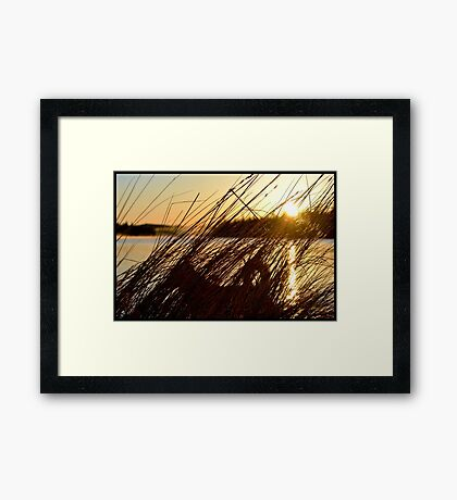 Hay of the Dog Framed Print