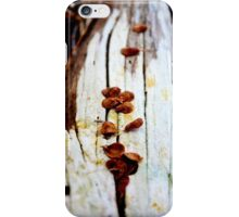 White Driftwood in Autumn iPhone Case/Skin