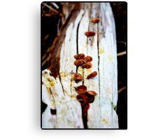 White Driftwood in Autumn Canvas Print