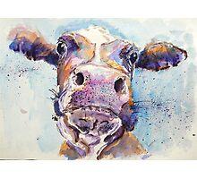 Haughty Cow Photographic Print
