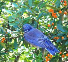 Blue Birdy by farrahbear