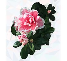 Azalea. Polygonal pink flower with green leaves. Photographic Print