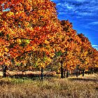 Tree Line Fall I by Roger Passman