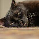 Black Witch Cat by d1373l