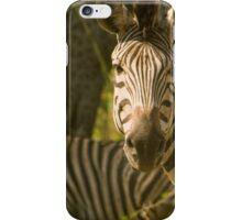 2 Zebras 1 Giraffe iPhone Case/Skin
