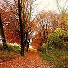 An Autumn Walk by hootonles