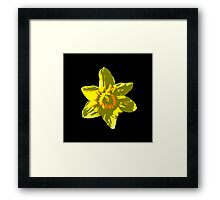 Daffodil on Black Framed Print