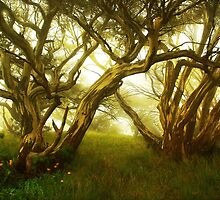Snowgums, Mount Speculation by Kevin McGennan
