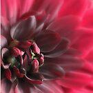 Ladies Series - Soft Whisper by Deborah Crew-Johnson