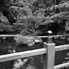 Still Time. Kubota Japanese Gardens, Renton, WA by Igor Pozdnyakov