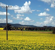 Fields of canola, Parkes telescope. by NGW01